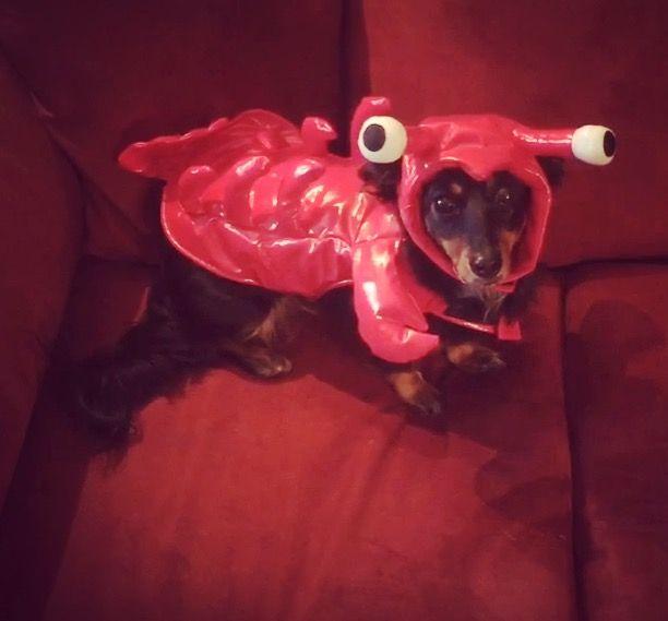Rock-lobstaa!