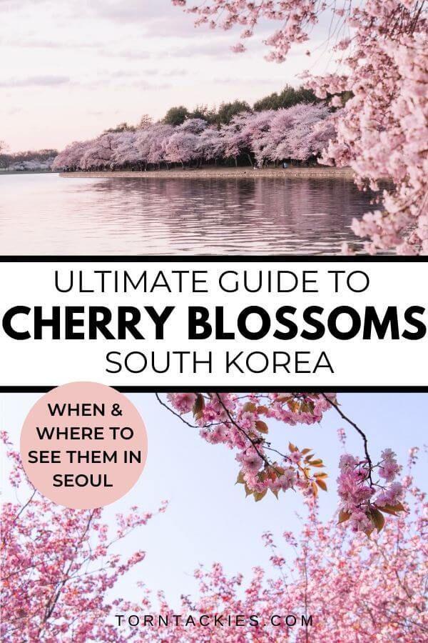 Where To See Cherry Blossoms In Seoul Korea Korea Travel Asia Travel Travel Destinations Asia