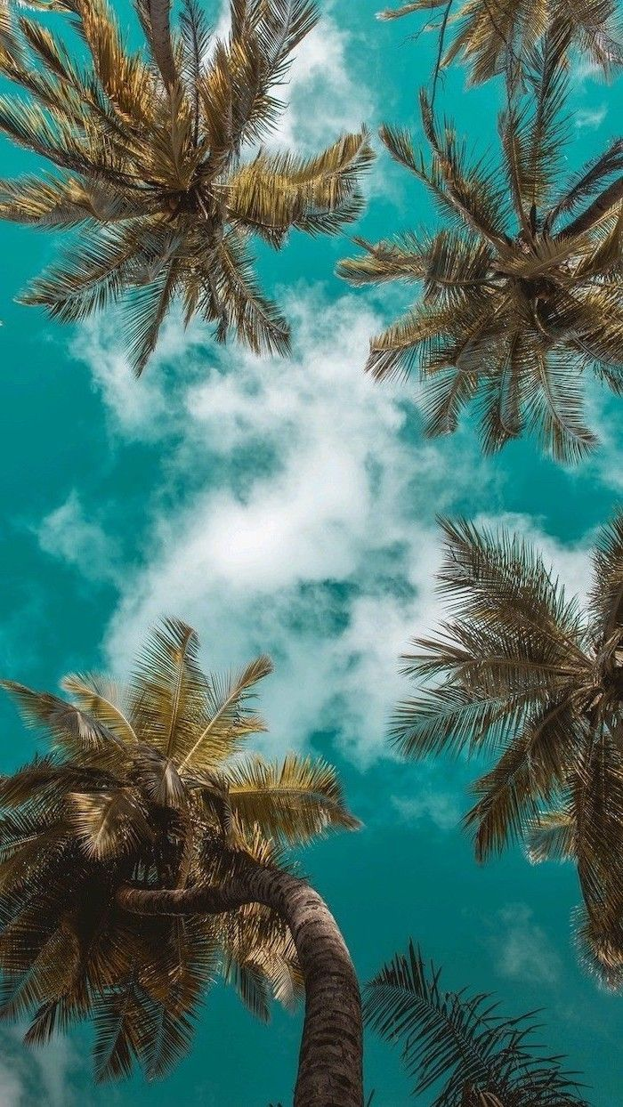 computer backgrounds palm trees blue sky