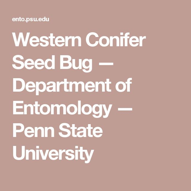 Western Conifer Seed Bug — Department of Entomology — Penn State University