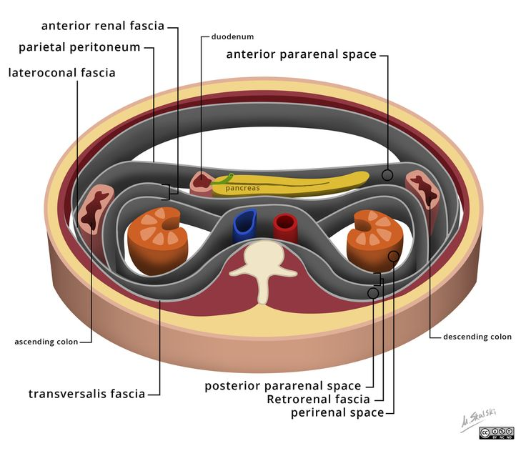 The retroperitoneum is the part of the abdominal cavity that lies between the posterior parietal peritoneum and anterior to the transversalis fascia. It is divided into three spaces by the perirenal fascia and is best visualised using CT or MRI. The three spaces are: anterior pararenal space perirenal space posterior pararenal space http://radiopaedia.org/articles/retroperitoneum