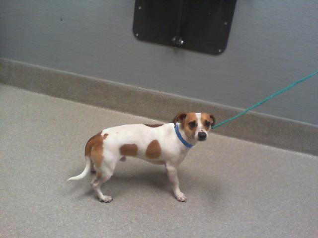Adopt Lawson On Petfinder In 2020 Dog Adoption Adoption Pet Adoption