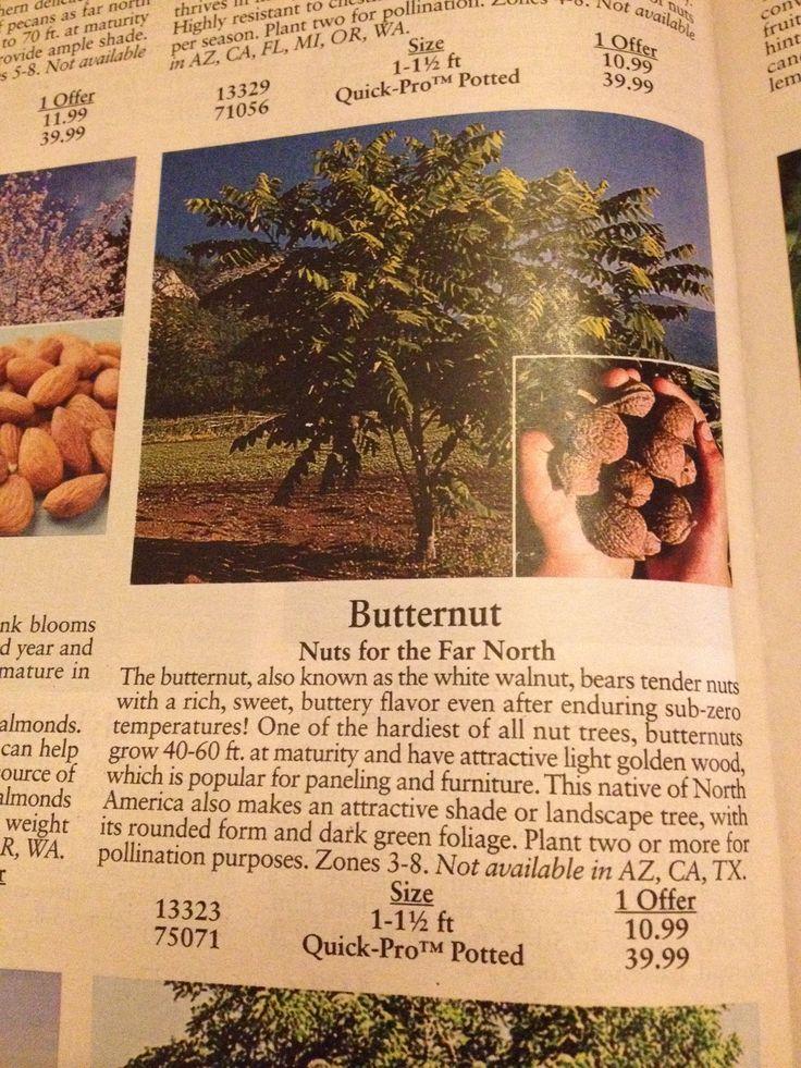 how to make macadamia nut tree more fruitful