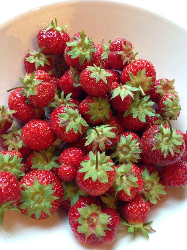 Strawberries from my backyard