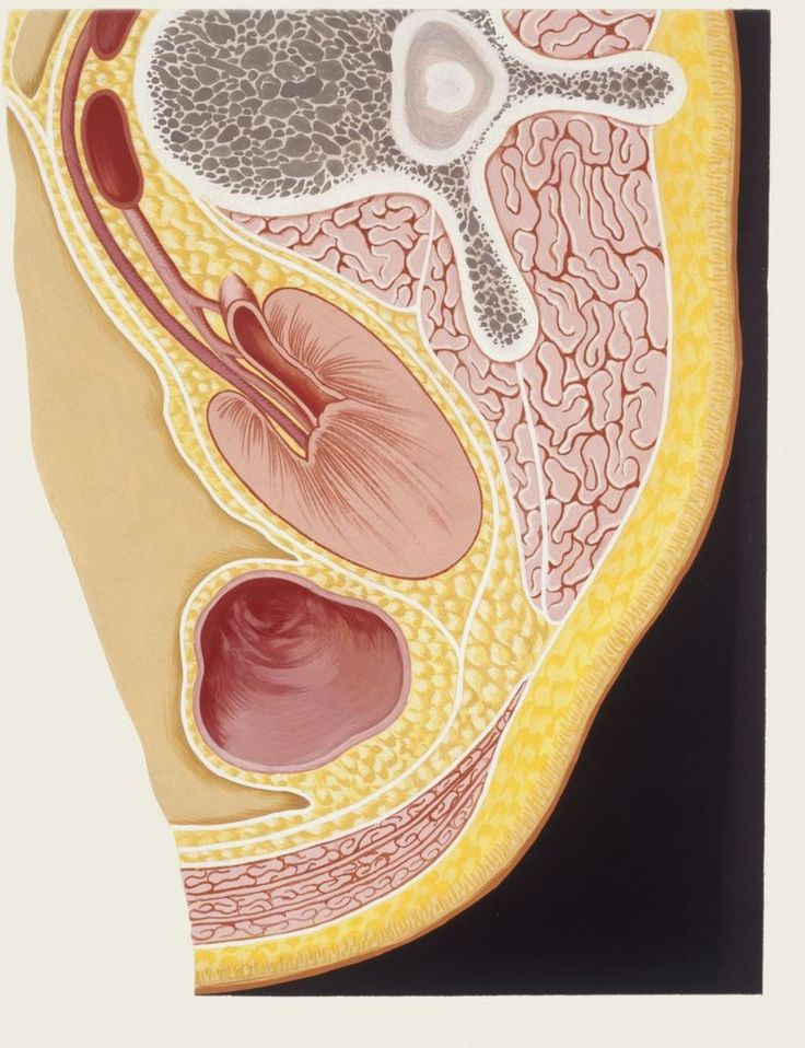 What Is the Omentum's Role in Metastatic Ovarian Cancer?