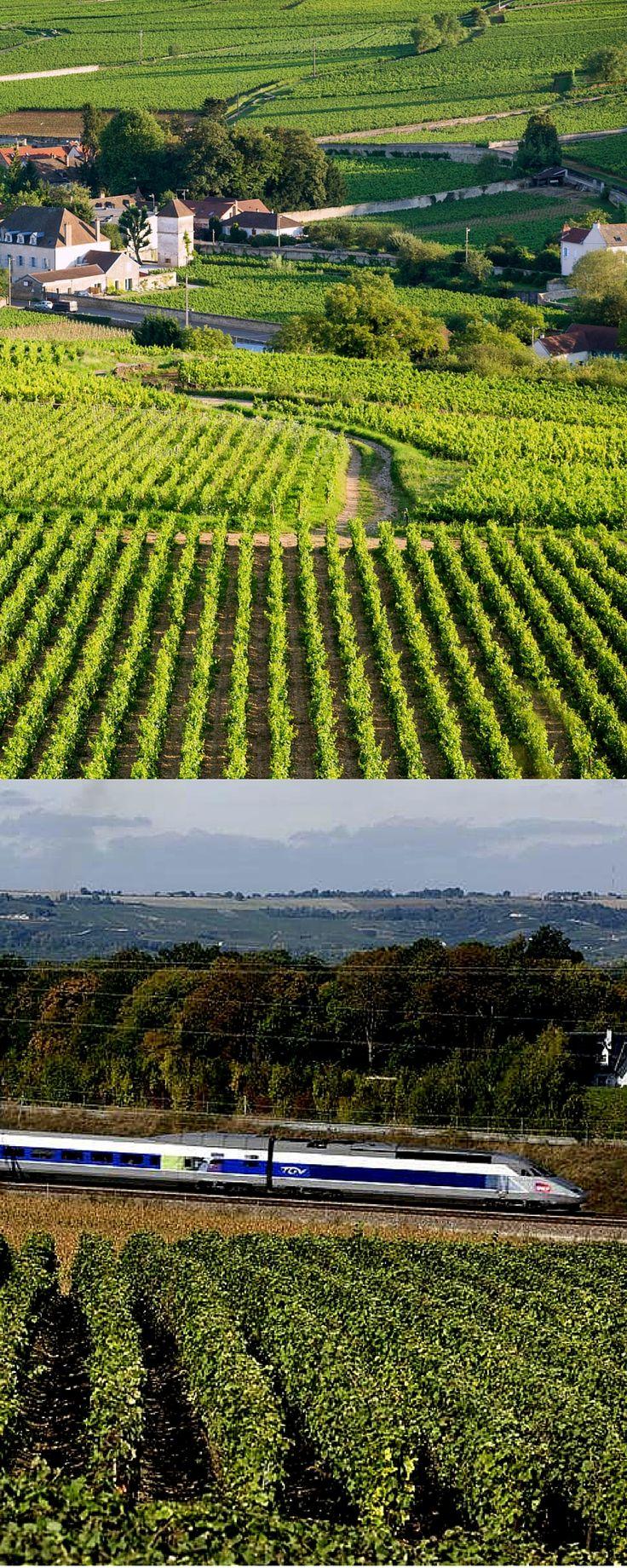 Visite os vinhedos da Borgonha de trem! Dijon e Beaune são duas das cidades com estações de trem nessa região. #france #frança #borgonha #vinhedos