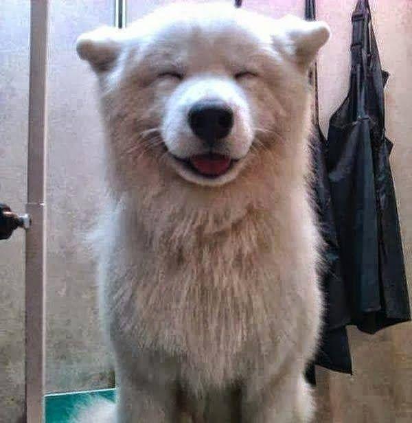 Dicas pet shop sua pet stores: 5 mais adorável cachorro rostos sorridentes que você já viu