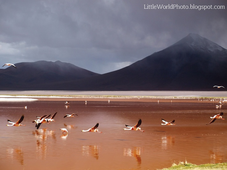 Laguna Colorada,Bolivia.     The salt lake is famous for the reddish color of its waters and James's Flamingos, abound in the area.