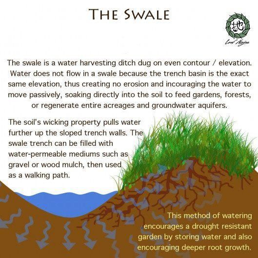 Swales are one of the most effective methods of irrigation and fertilization. Coming soon at Heart 2 Heart Farms https://www.facebook.com/Heart2HeartFarms