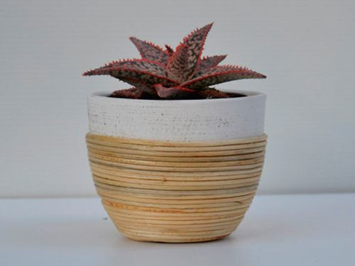 tienda de cactus y suculentas online