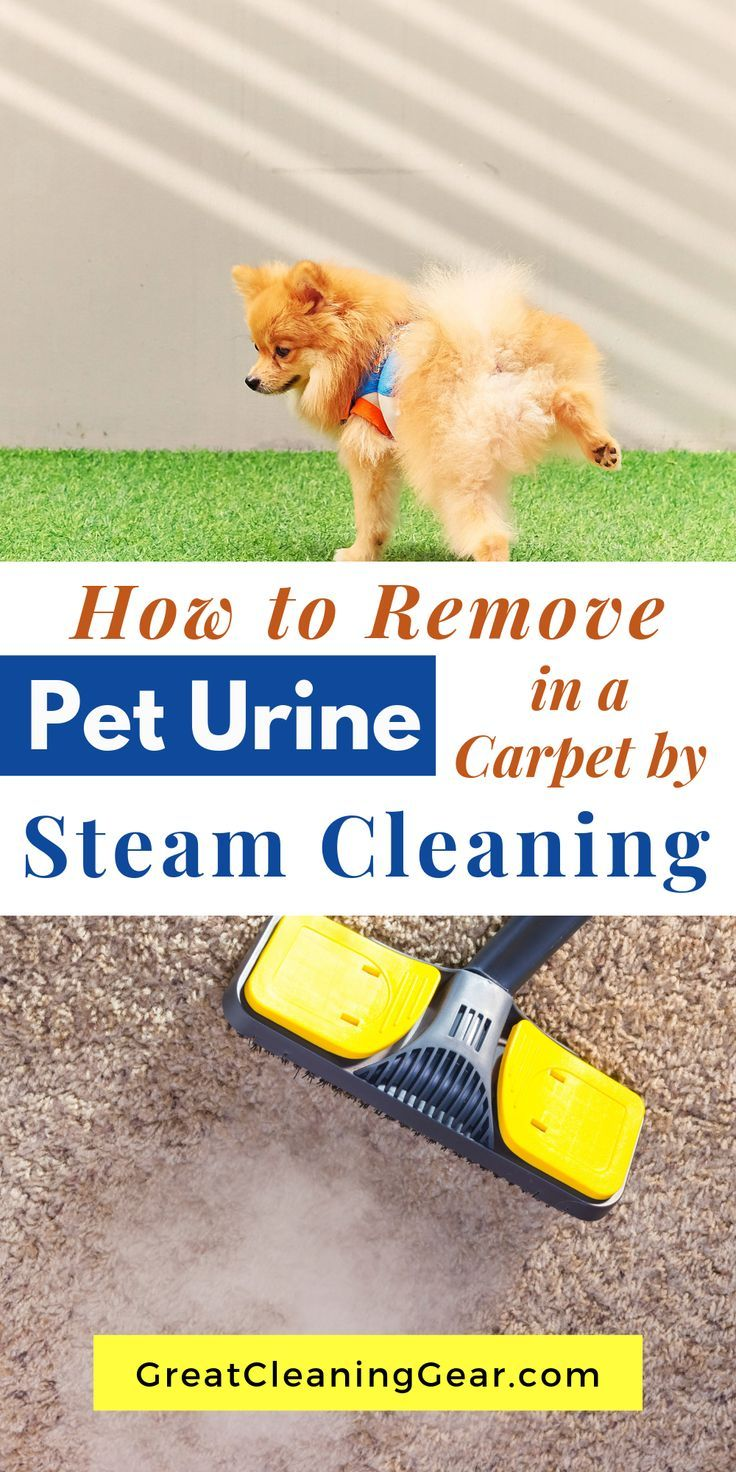 How To Steam Clean Carpet To Remove Dog Urine Steam Clean Carpet Carpet Steam Cleaner Cleaning Pet Urine