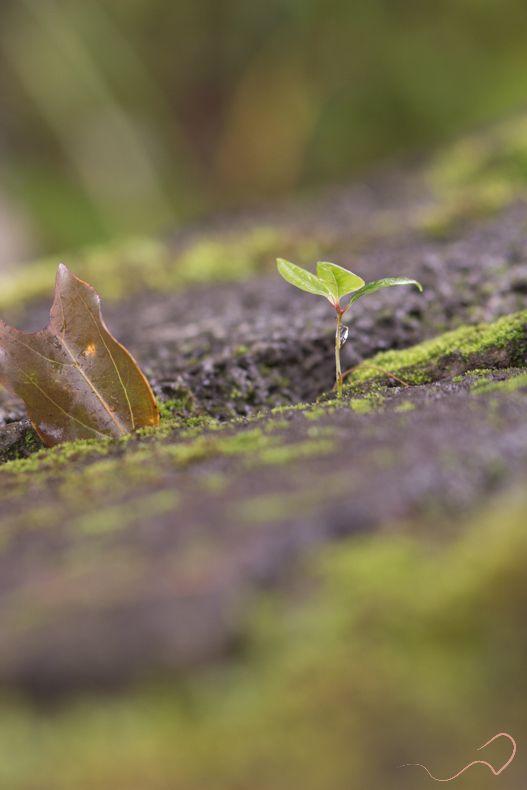 #fragile #new #born #plant #little #tiny #Mauritius #travelling