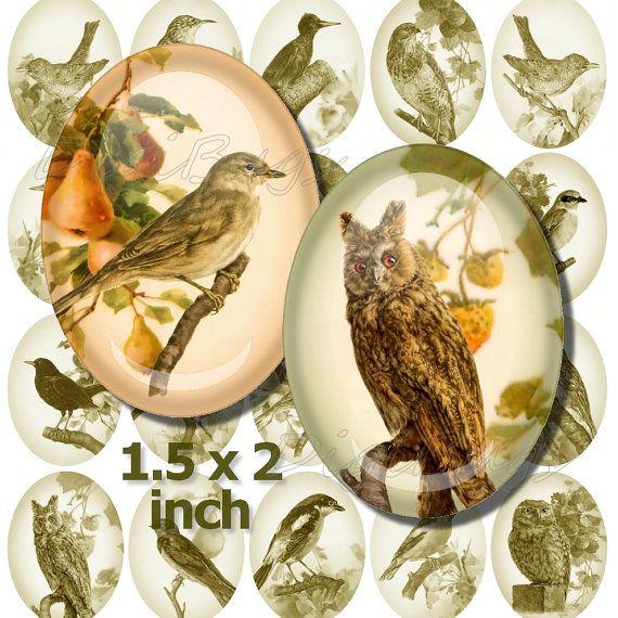 Printable Bird Images, Digital Collage Sheet, Vintage Bird Illustrations, 1.5 x 2 inch Ovals, Bird Ovals, Instant Download, DigiBugs a1