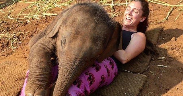 #HeyUnik  Bayi Gajah yang Imut Ini Bener-bener Bikin Gemes, Coba deh Liat apa yang… #Hewan #Travel #Unik #YangUnikEmangAsyik
