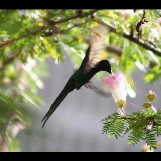 Descreve o teu pin...m: Hummingbird Photographed, Teu Pin M