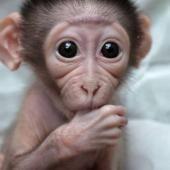 Süße und lustige Tiere #62   Picdumps @ echtlustig.com - Lustige Bilder, Verrückte Fotos und Pics die dich zum Lachen bringen