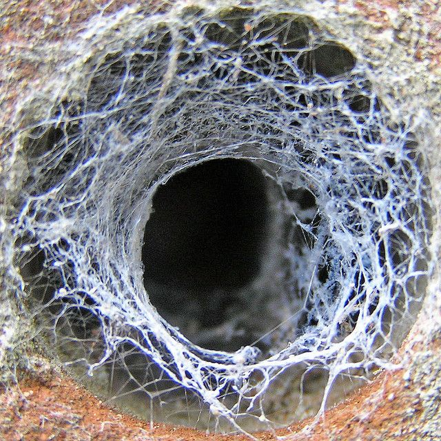 I see spider webs like this all over our lawn in the summer but I've never seen a spiders web over a hole in a brick wall like this.