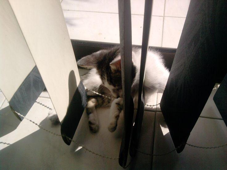 Sofía - La gata recien llegada año 2012