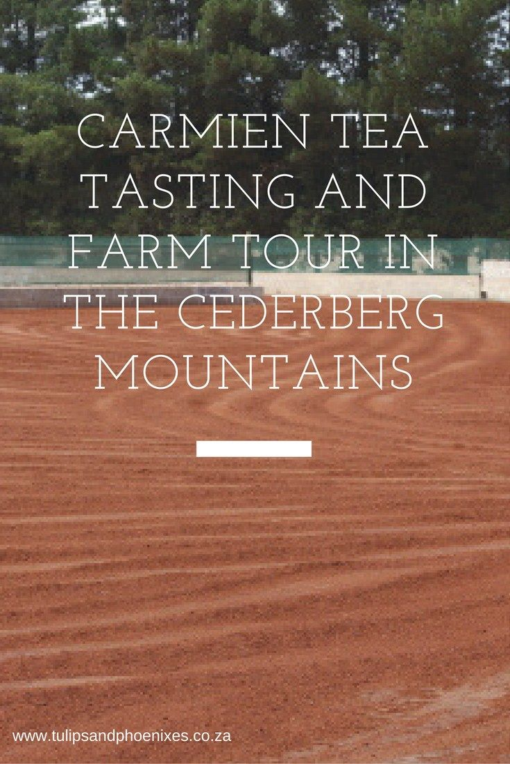Rooibos tea is exclusively grown in the Cederberg region in the Western Cape of South Africa. Carmien tea on the Bergendal farm just outside Citrusdal shows you exactly how this world famous tea is made on their rooibos tea farm tours. Carmien tea also offers tea tasting as well as tea, wine and food pairing. Click to read more!