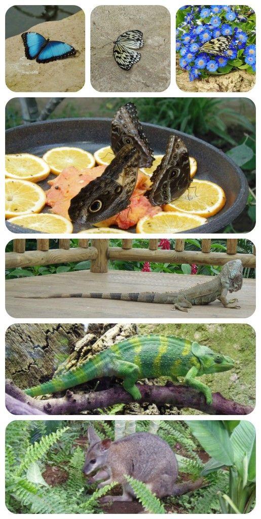 Visita al Mariposario Benalmádena - Visiting Benalmadena Butterfly Park