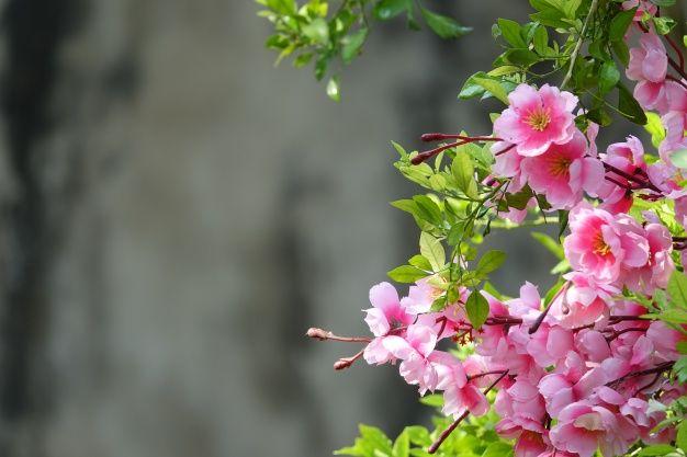 flores cor de rosa com fundo desfocado Foto gratuita