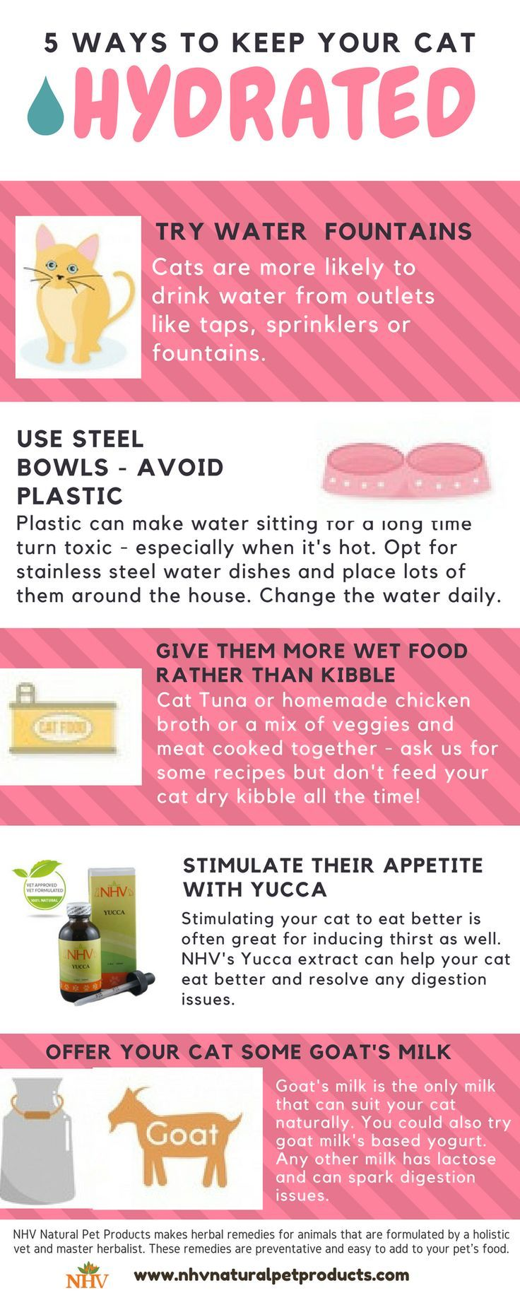 Simple Steps For A Healthy Puppy And Healthy Kitten Pet Hacks