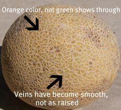 Wie man eine reife Melone, eine Wassermelone und Kirschen pflückt
