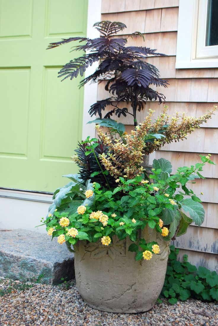 Best 25 Potted Trees Ideas On Pinterest Patio