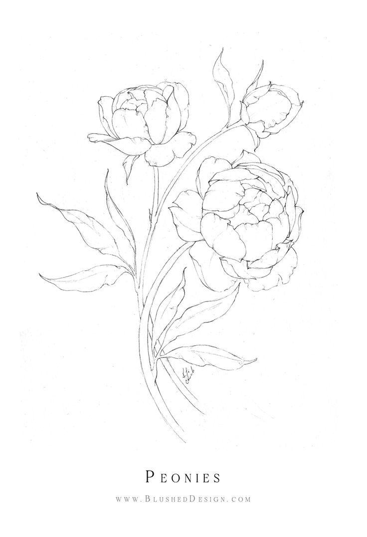 Inktober Flower Drawings 2019 Blushed Design In 2020 Peony Drawing Flower Line Drawings Flower Drawing