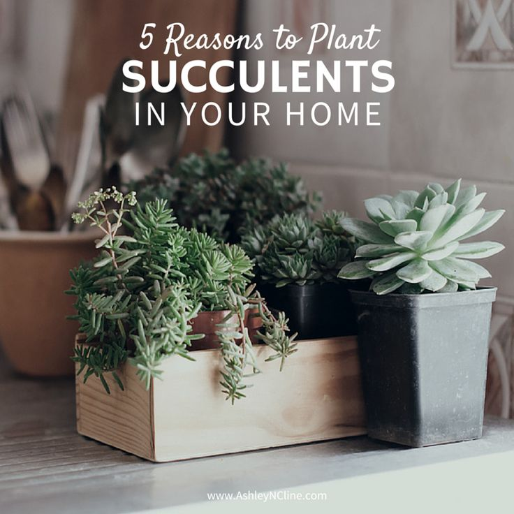 17 best images about house plants on pinterest bathroom for Low maintenance air purifying plants