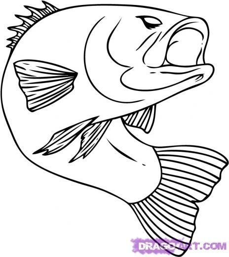 Step 6. How to Draw a Bass Fish
