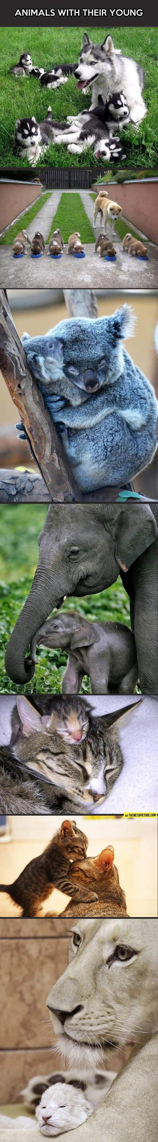 Animals with their babies