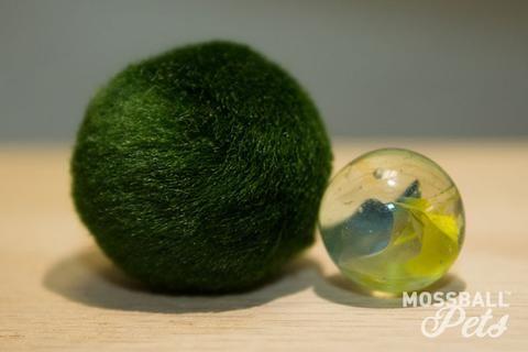 Junior Moss Ball Pet™ (6 to 8 Years of Age) Moss balls