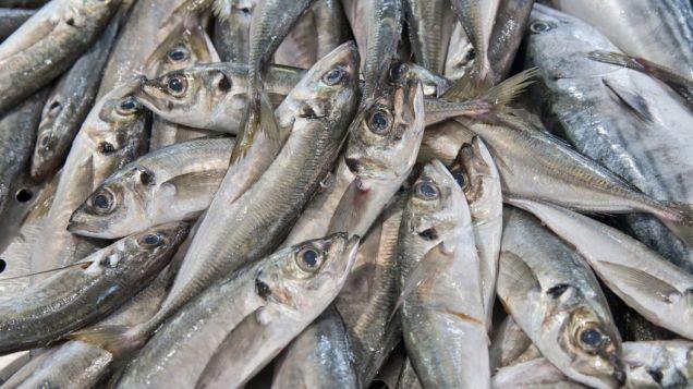 Szczęście ma smak śledzia. Tłuste ryby pomogą nam walczyć z sezonową depresją - http://tvnmeteo.tvn24.pl/informacje-pogoda/ciekawostki,49/szczescie-ma-smak-sledzia,159521,1,0.html