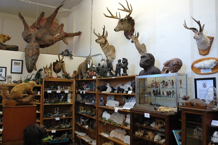 The International Cryptozoology Museum in Portland, Maine