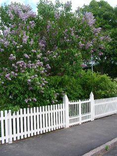 staket trädgård