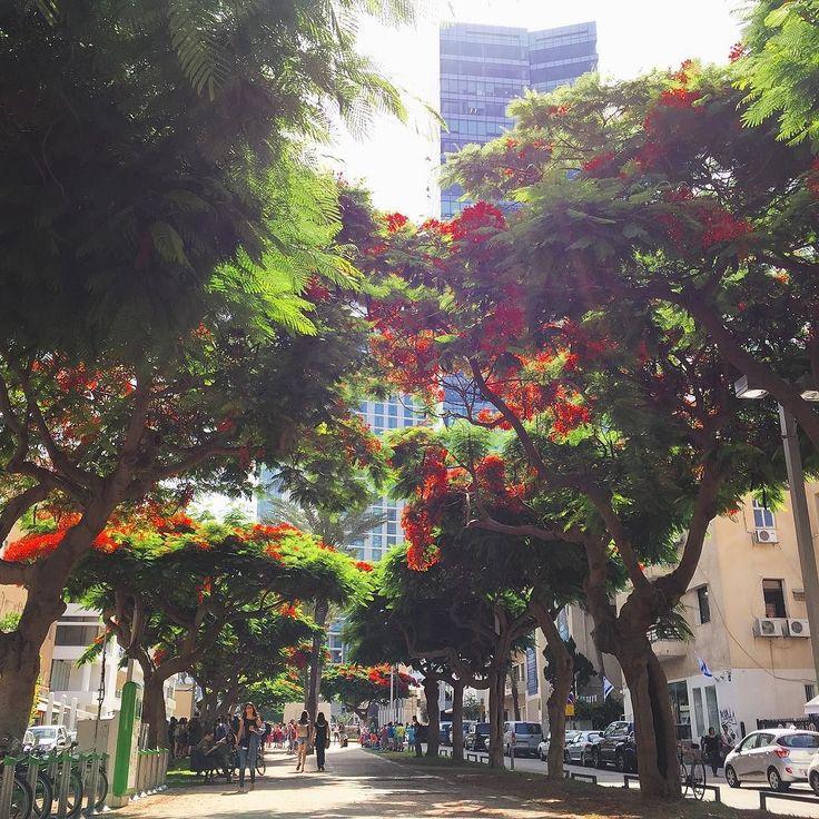 #ExploreIsraele - Due passi in Rothschild Boulevard uno dei viali più popolari di Tel Aviv. Qui si trovano numerosi locali gay ma anche i popolari caffè chioschi che servono il caffè locale simile al caffè turco. La vita scorre tra i boulevard di Tel Aviv e un'altra giornata comincia! #visitisrael