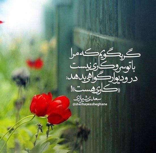 #سعدی #saadi ❣❣❣