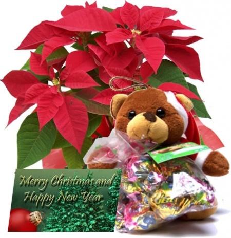 La navidad es época de sentimientos... nostalgia y alegría. Particularmente si se está lejos, en otro país, con nuevos amigos, pero añorando viejos tiempos.  En ese caso puede enviar una tarjeta con Saludo Navideño, a Bogotá Colombia, acompañada de un osito, simbolo de calor humano, unos chocolates y la bella Flor de Navidad (La Poinsetia) USD$44