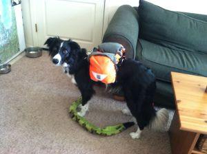Dog Gear for a Thru Hike