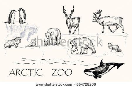 Vector illustration. Pen drawn arctic animals set: penguins, polar bears, walrus, seal, polar fox, reindeers, orca whale.