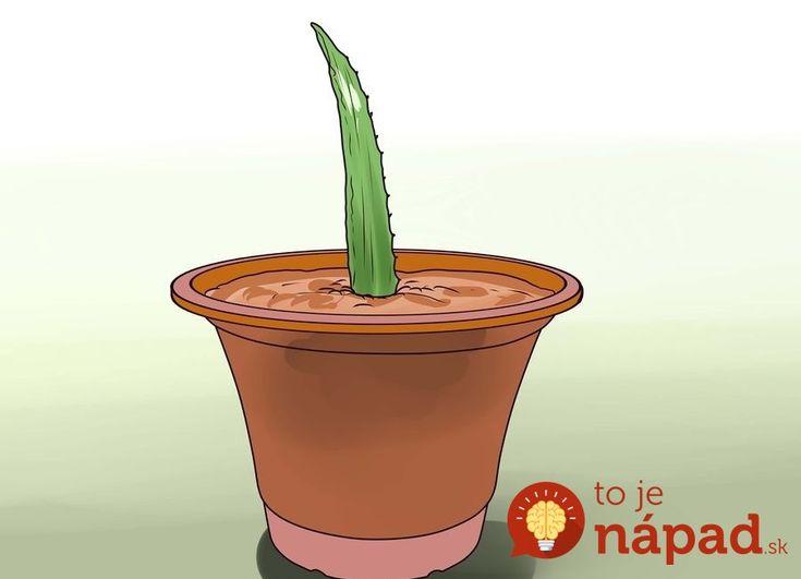 aid2287521-900px-Grow-an-Aloe-Plant-With-Just-an-Aloe-Leaf-Step-7