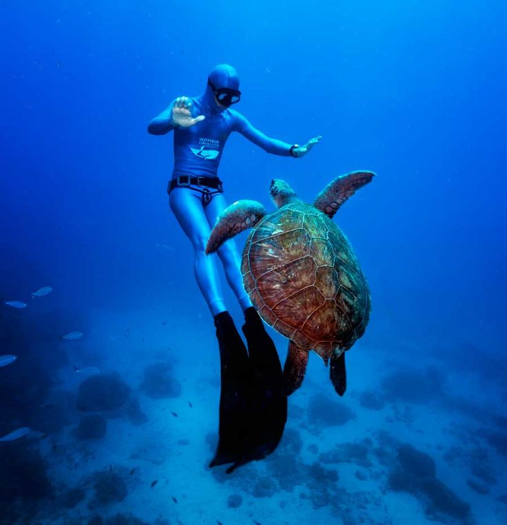 http://sklep-nurkowy.pl/freediving-c-437.html  Nowy dział w Sklep - Nurkowy.pl! Freediving dla wszystkich fanów wielkich niebieskich głębi! Profesjonalny sprzęt do nurkowania swobodnego w rewelacyjnych cenach!