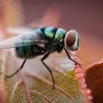 Cómo ahuyentar moscas
