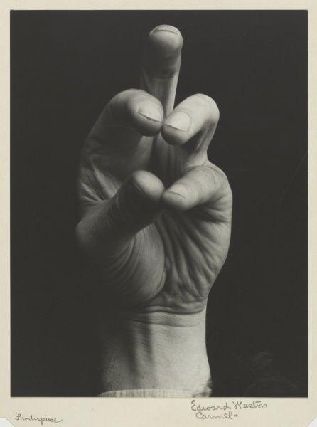 Study of David Alberto's Left Hand / Edward Weston / c. 1930 / gelatin silver print