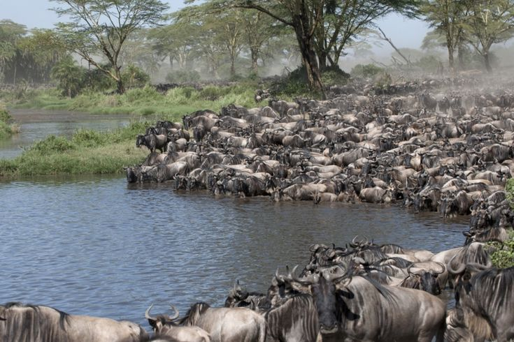 The marvels of African wildlife, followed by other continents, as Iain Stewart points out the tectonic reasons why life has assumed its rich variety of shapes and sizes.