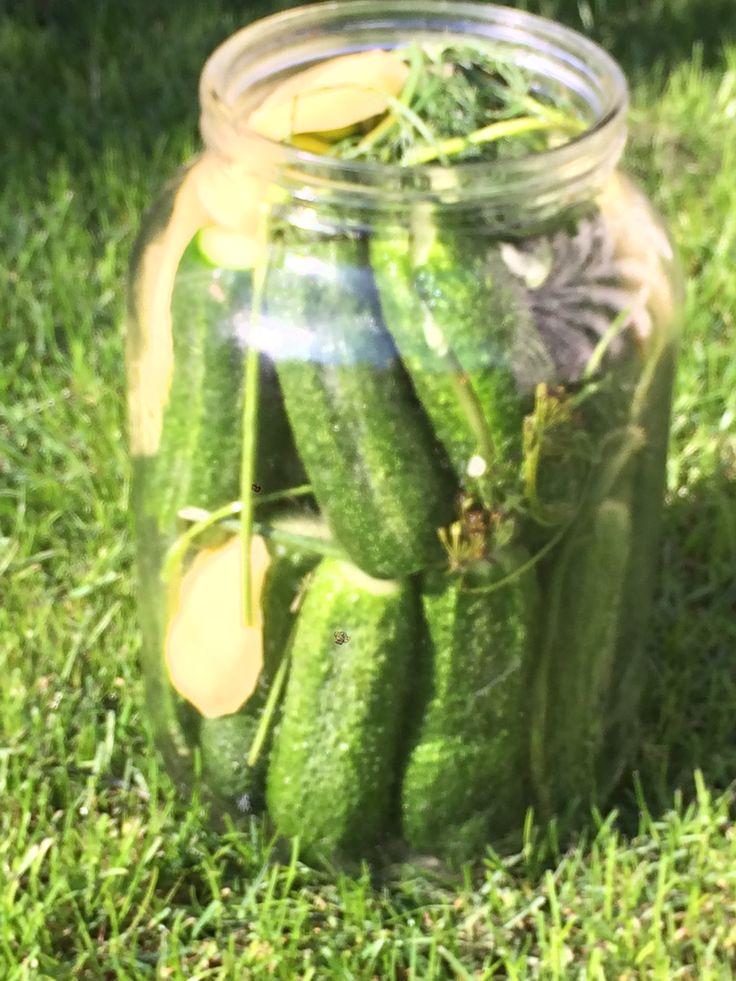 Gluténmentes kovászos uborka - klasszikus sváb recept