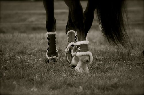 : Favorite Things, Things Equestrian, Posts, Fluffy Boots