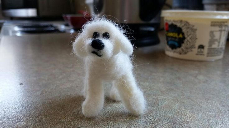 Buster the Bishon Poodle x