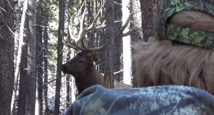 Monster Elk Dropped at 5 Yards in Colorado Bowhunt [VIDEO]